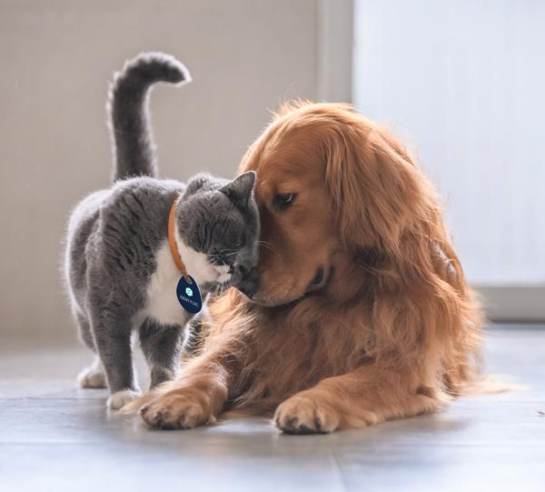 perro gato identylog colgante proteccion