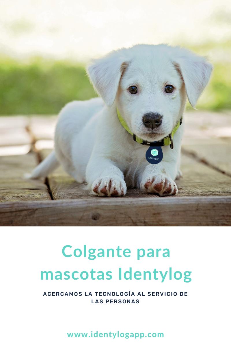 colgante mascotas identylog