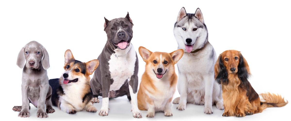 Colgantes para mascotas